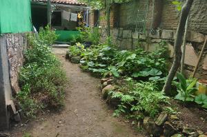 Mini-horta do Nossas Raízes. Foto: Verusa Pinho