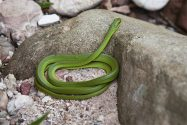 Cobra Verde | Foto: Açony Santos