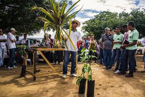 Demonstração sobre o plantio de abacaxi orgânico