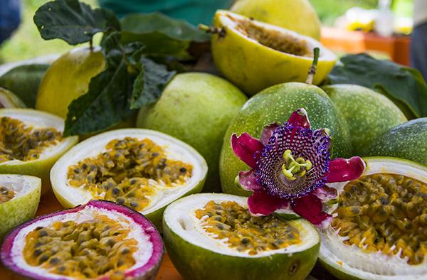 Variedades de maracujá cultivadas pelo projeto