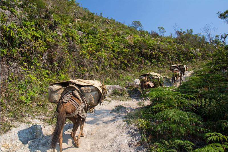 Transporte de Mercadorias no Vale do Pati | Foto: Caiã Pires