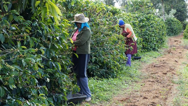 Fazenda São Judas Tadeu, aberta à visitação turística. Foto: Acervo da Fazenda.